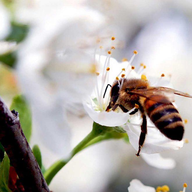 Im Zauber der Blütenwelt. <br>Mit Bienen blüht das Leben!